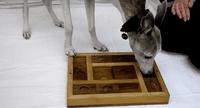 Dog Puzzle Toy - Slider